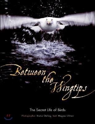 Between the Wingtips: The Secret Life of Birds