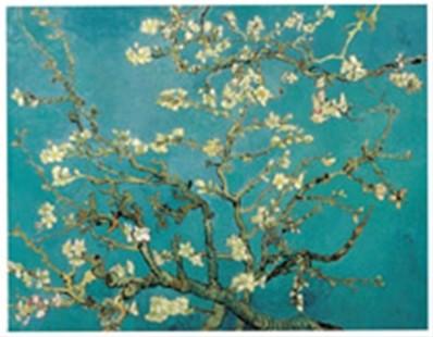 꽃이 핀 아몬드 나무